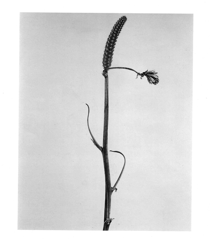 Joan Fontcuberta Herbarium